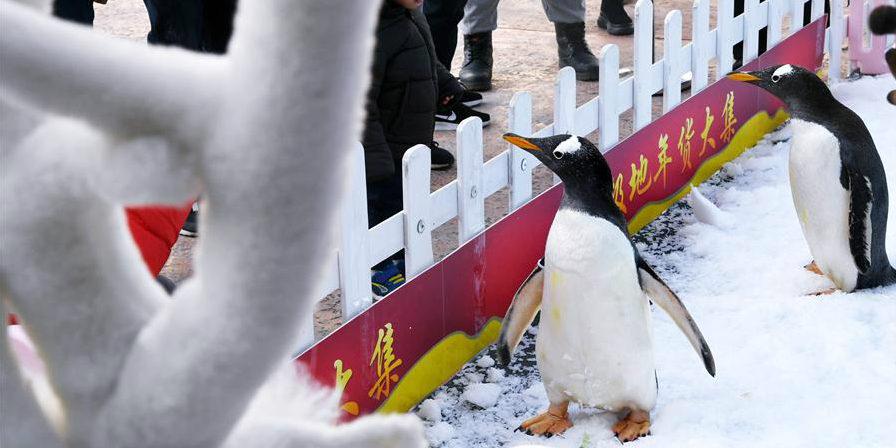 Visitantes observam pinguins em Qingdao, Shandong