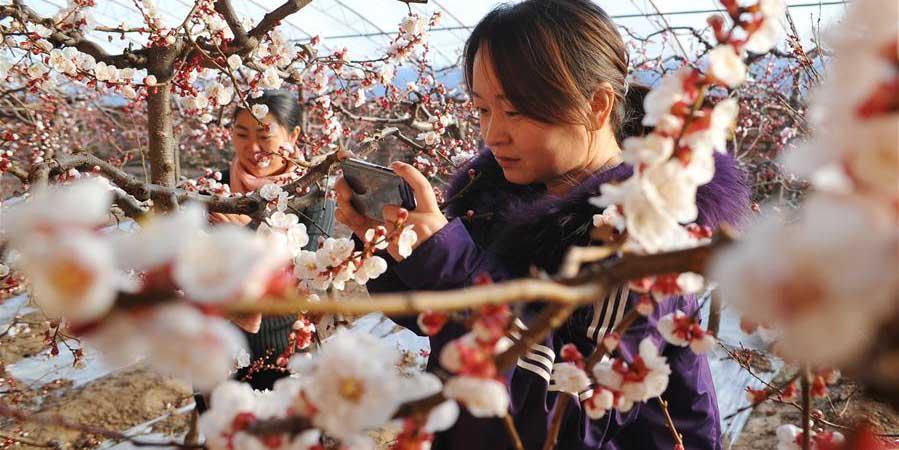 Fotos: Agricultores cultivam flores e árvores em estufas