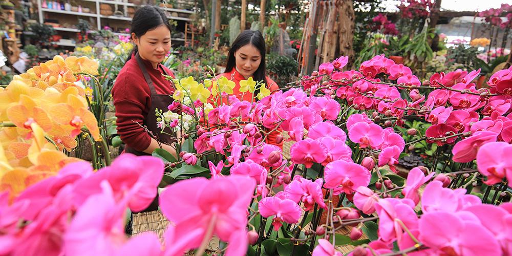 Setor de varejo de flores se prepara para demanda do Festival da Primavera