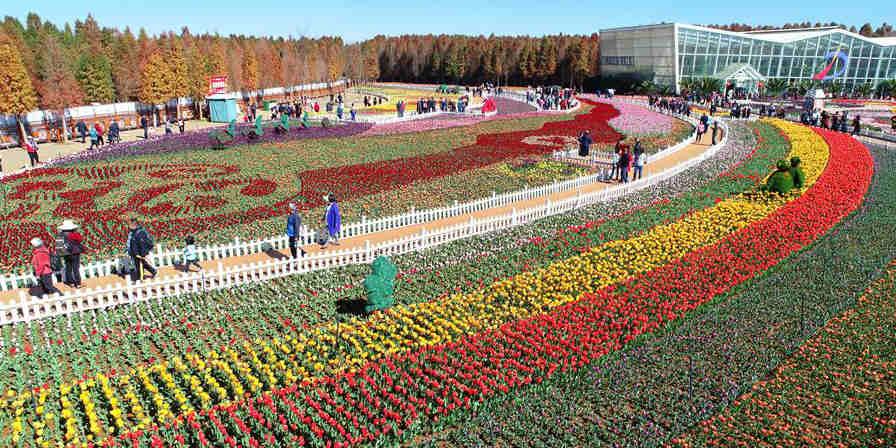 Mais de 50 variedades de tulipas florescem em parque de Yunnan