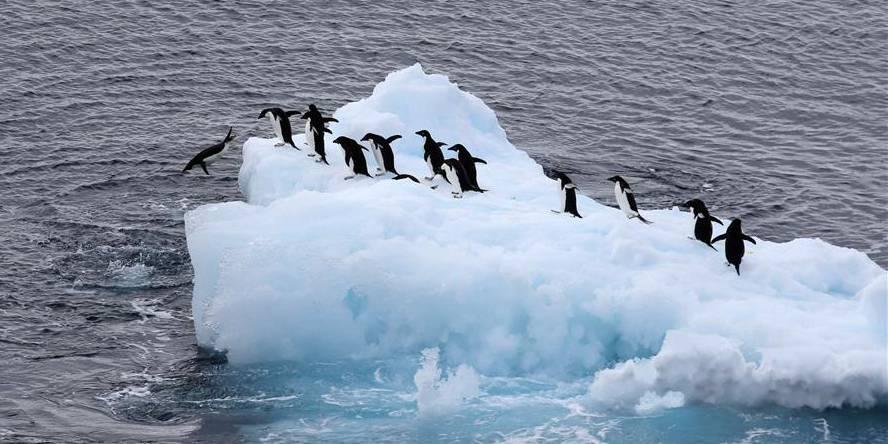 Xuelong, navio quebra-gelo de pesquisa da China, deve retornar a Shanghai em meados de março
