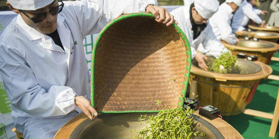 Atividade de abertura de jardim de chá da primavera no distrito de Zigui em Hubei