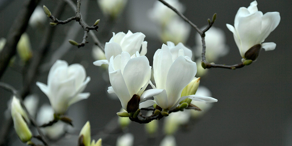 Flores florescem ao redor da China