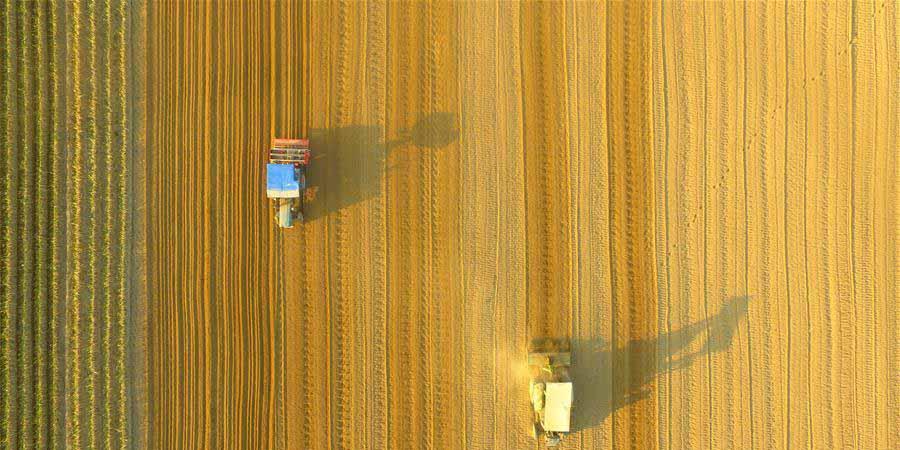 Fotos: Agricultores chineses trabalham nos campos ao redor do país