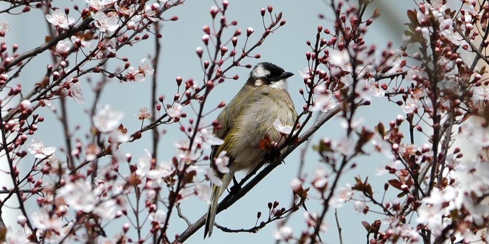 Fotos: Pássaros em Shanghai, leste da China