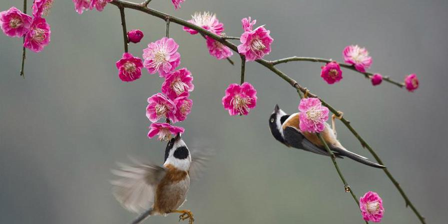 Pássaros voam ao redor de flores em Jiangsu