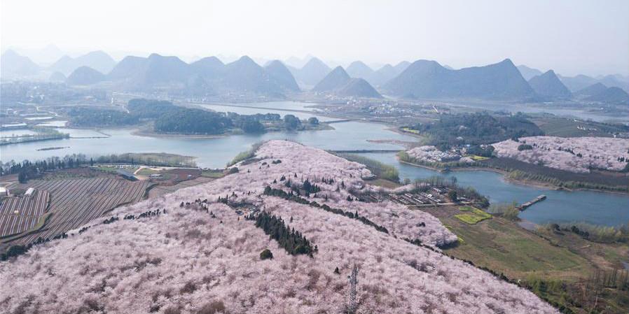 Fotos: Flores de cerejeira em Guizhou