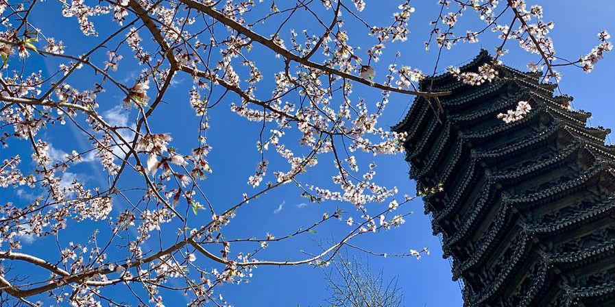 Cenário da primavera nas universidades de Pequim e Tsinghua