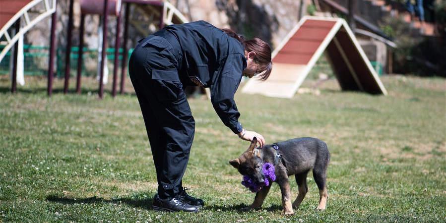 Primeiro cão policial clonado da China recebe treinamento em Yunnan