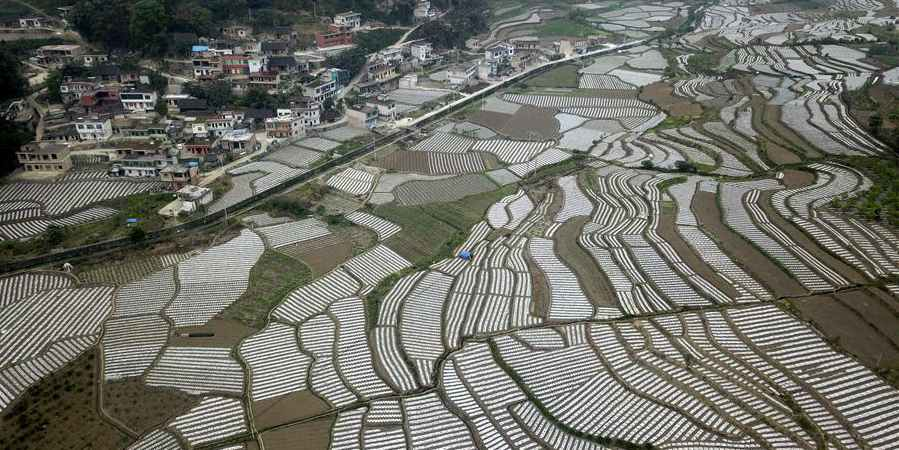 Fotos: Base de vegetais em Guizhou, sudoeste da China