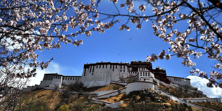 Fotos: flores ao redor do Palácio de Potala em Lhasa, sudoeste da China