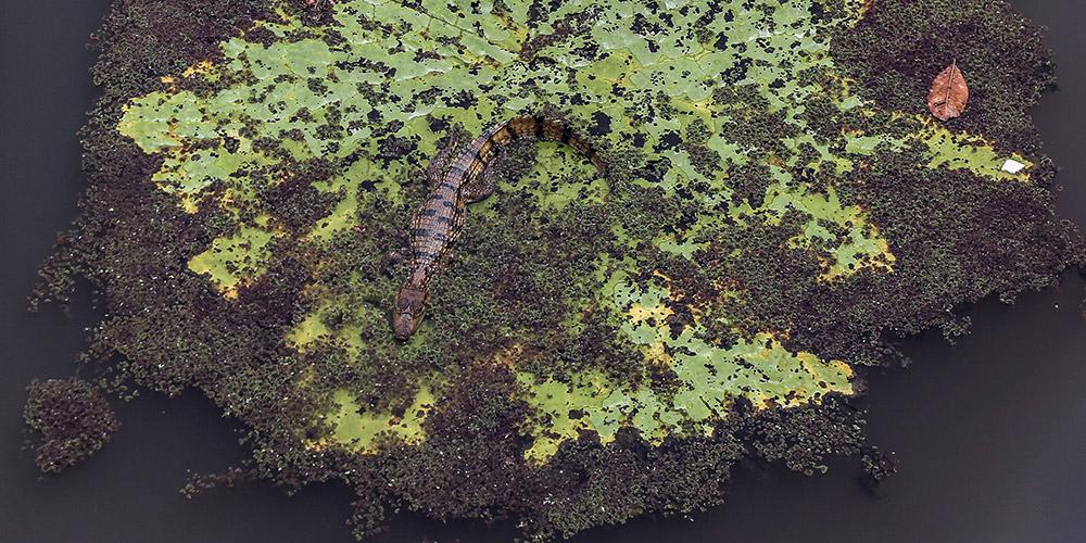 Floresta amazônica, o maior bioma do Brasil