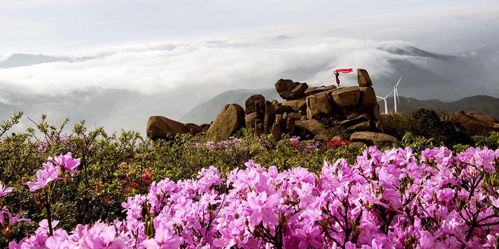 Paisagens da primavera em toda a China