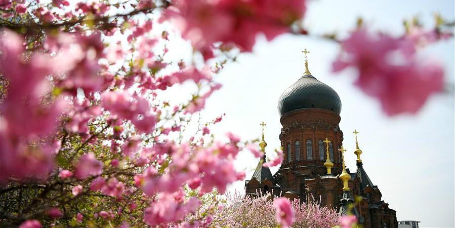 Fotos: flores ao redor da Catedral de Santa Sofia em Harbin