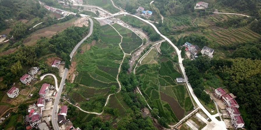 Aldeia Dawan se empenha em desenvolver indústria do chá e turismo rural para aumentar a renda dos agricultores