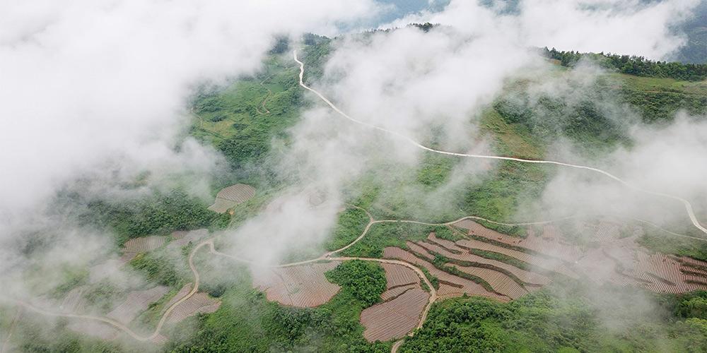 Galeria: campos de terraço em Hubei, centro da China