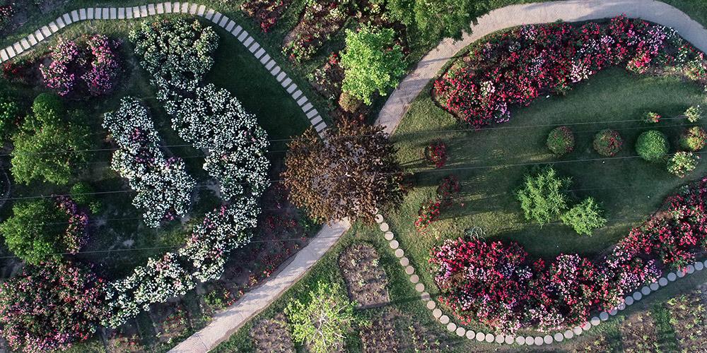 Área de Desenvolvimento Econômico-Tecnológico de Tianjin possui jardim botânico com mais de 6.000 espécies de plantas
