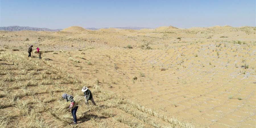 Cidade do noroeste da China faz esforços para conter desertificação