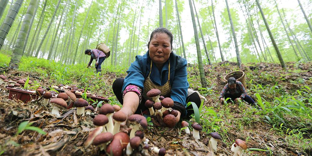 Agricultores de Guizhou fazem uso pleno da terra para desenvolver agricultura