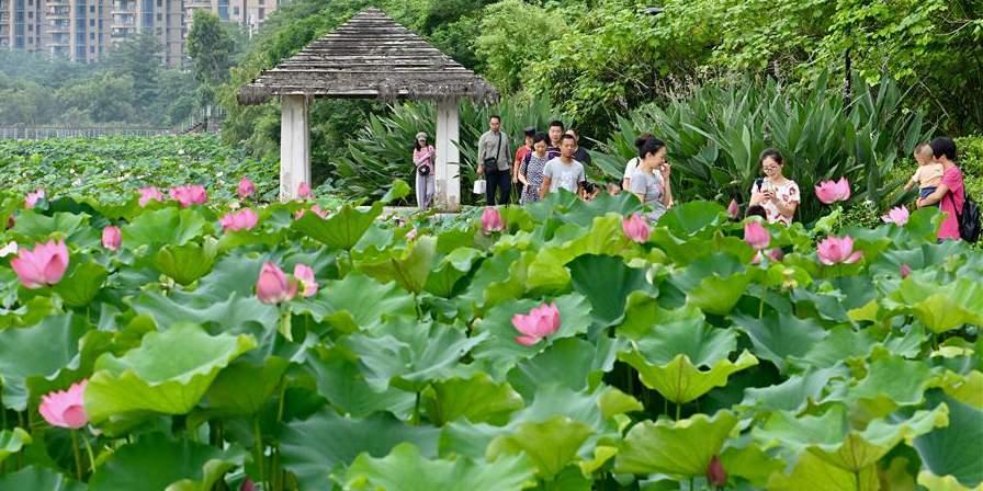 Fotos: flores de lótus em Fuzhou
