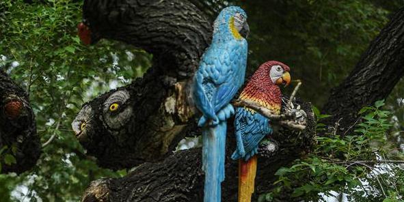 Design de arte cria esculturas em casca de árvore no Zoológico e Jardim Botânico de Changchun