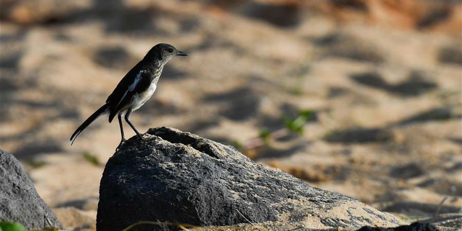 Fotos: pássaro no parque de pântano do rio Wuyuan em Hainan