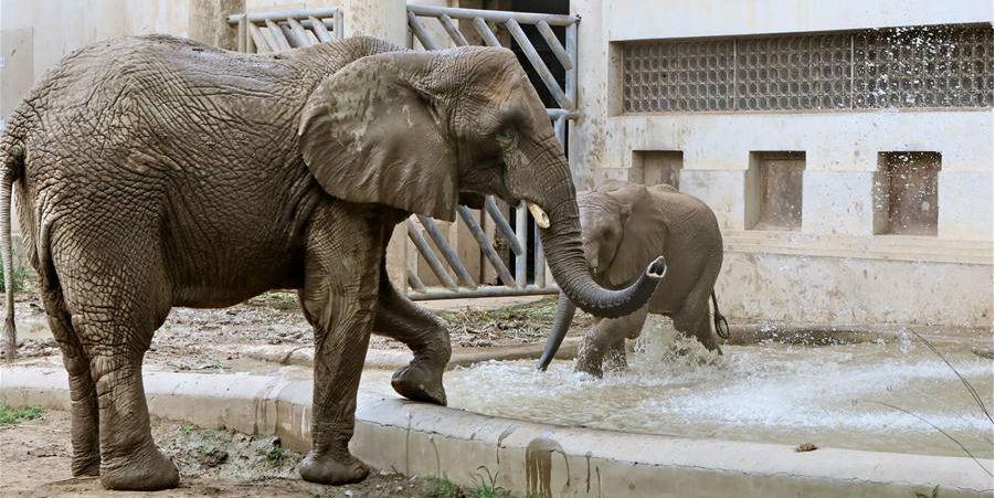 Zoológico de Beijing mantém animais refrescados em calor escaldante