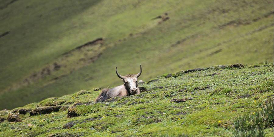 Fotos: paisagem de pradaria no Tibet, sudoeste da China