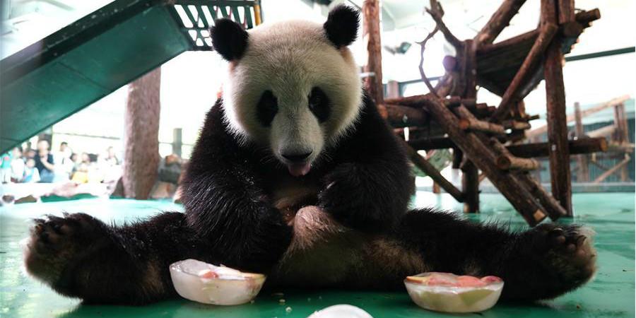 Zoológico de Shanghai toma medidas para ajudar animais a se refrescarem