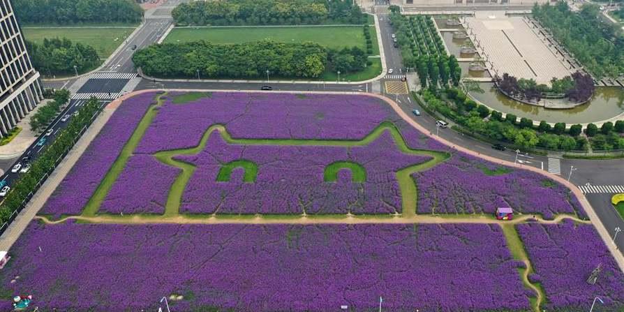 Paisagem de flores de verbena na Nova Área de Binhai em Tianjin, norte da China