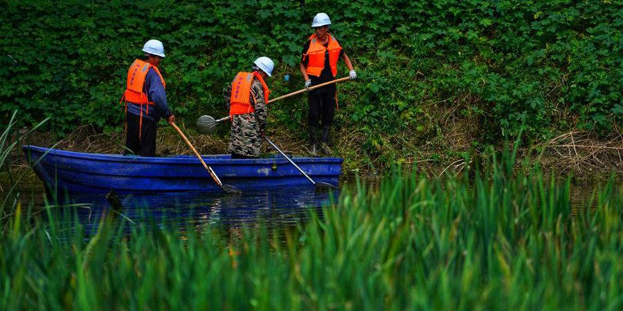 Fotos: trabalho de limpeza de lagoas poluídas na Nova Área de Xiongan