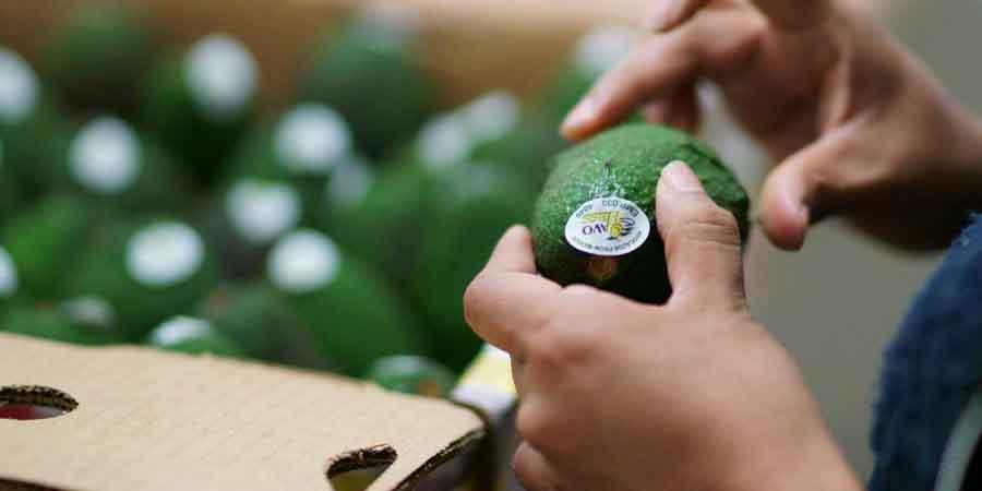 Brasil e México negociam acordo de livre comércio