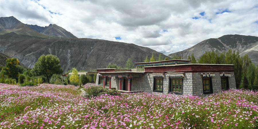 Paisagem de flores em floração no distrito de Nyemo, Lhasa, no Tibet da China
