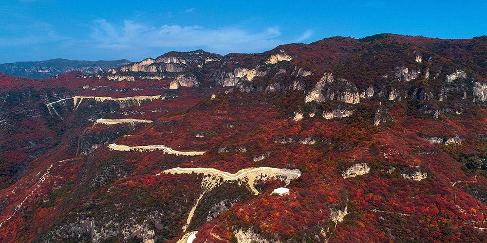 Paisagem de folhas vermelhas na montanha Taihang em Hebei