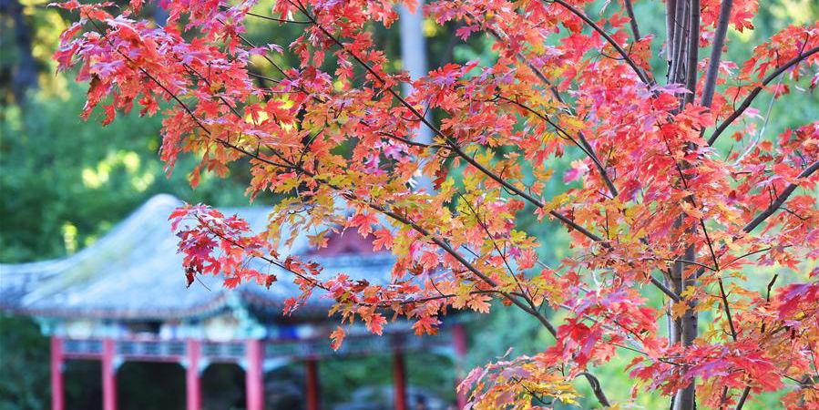 Paisagem de outono no parque Xiangshan em Beijing