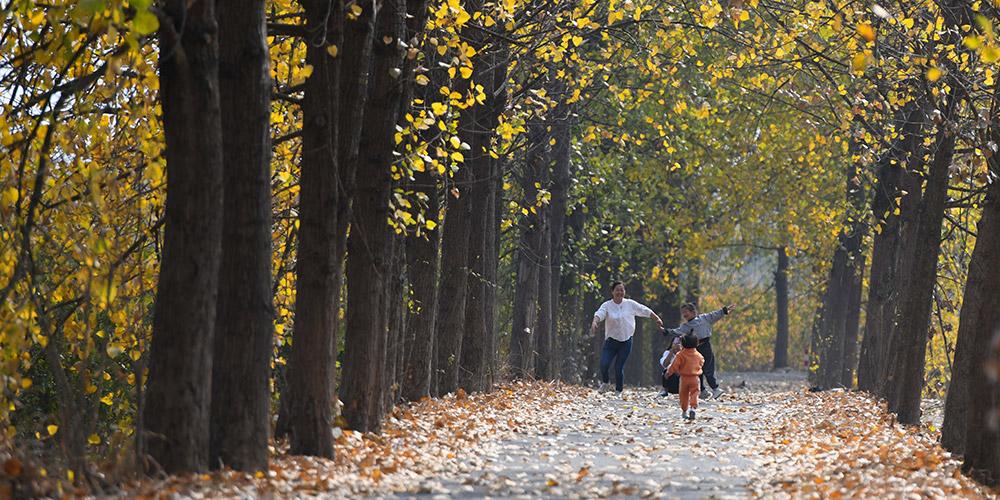 Paisagem do outono da vila de Sanshigang em Anhui, leste da China