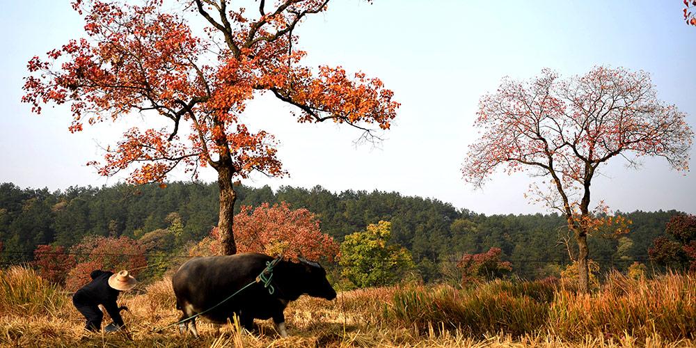 Paisagem de outono da montanha Dabieshan em Henan