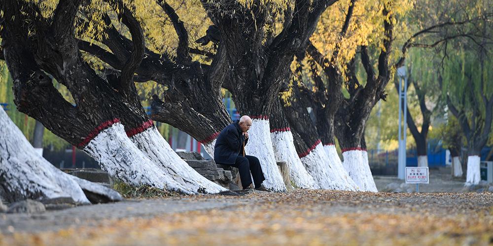 Paisagem de outono em Hohhot, norte da China