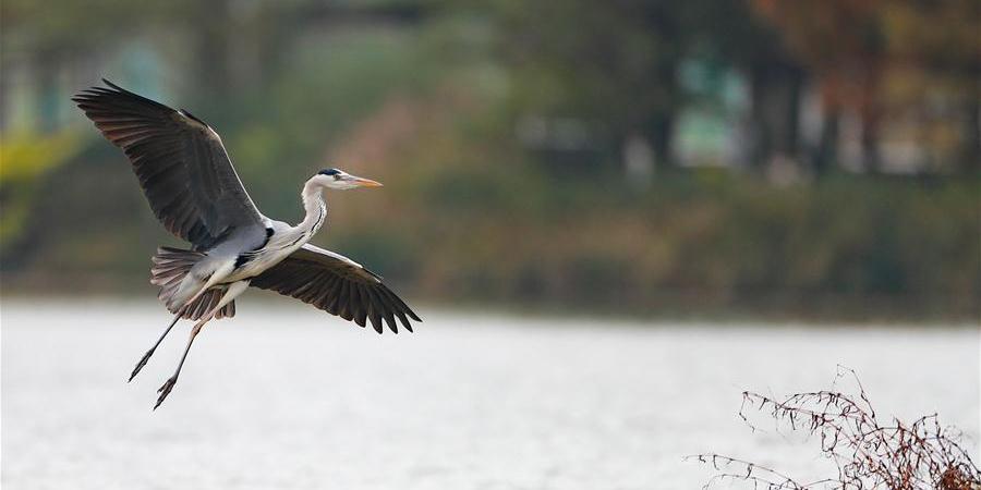 Bela paisagem do início do inverno no Parque do Lago Guanshan em Guiyang