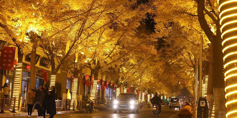 Bela paisagem de árvores de ginkgo em Gansu, noroeste da China