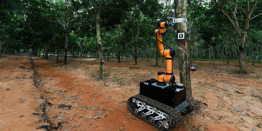Robô inicia teste de funcionamento da extração de látex no local em Hainan