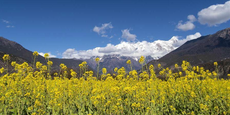 Paisagem do campo de flores de colza no Tibet, sudoeste da China