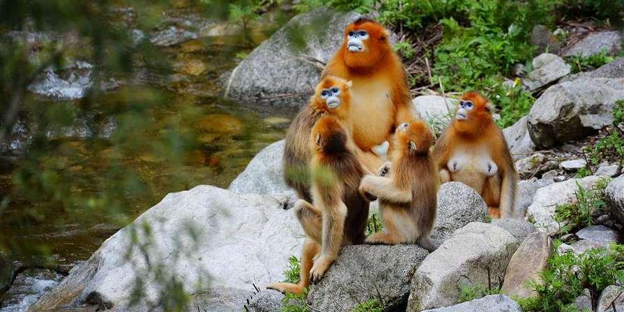 Montanhas Qinling: Lar de uma enorme variedade de plantas e animais selvagens em Shaanxi