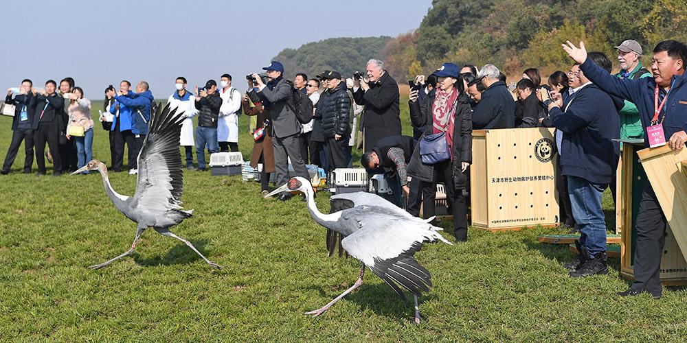 Aves migratórias resgatadas são devolvidas à natureza em Jiangxi