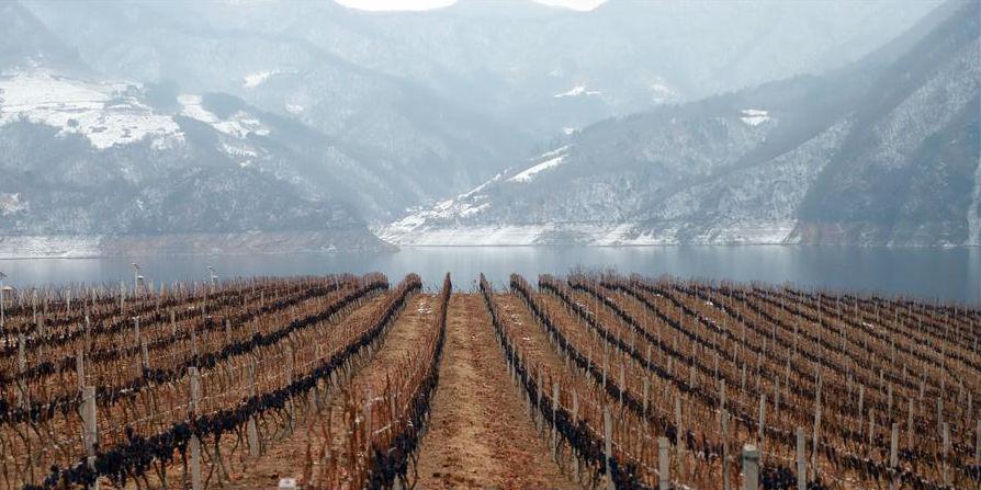 Festival de vinhos de uvas congeladas começa em Ji'an