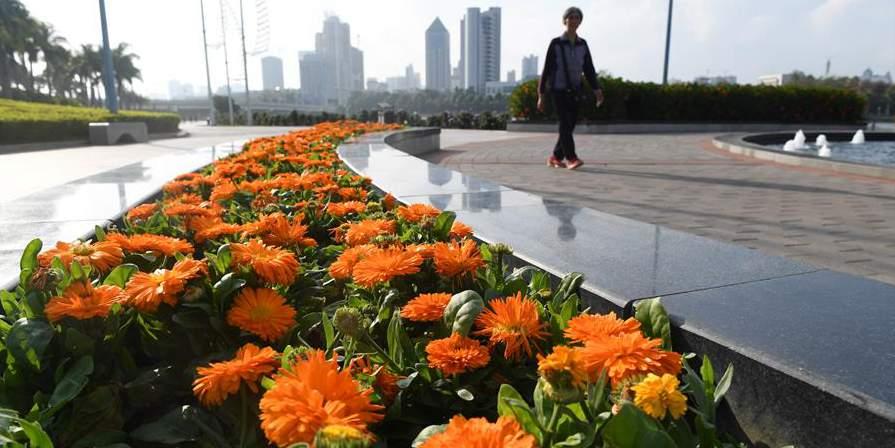 Flores de inverno em Nanning, capital de Guangxi, no sul da China
