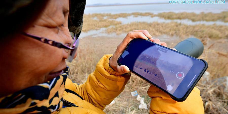 Fotos: Voluntária dedicado à proteção de aves no pântano do rio amarelo em Luoyang