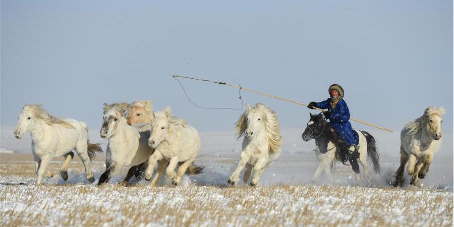 Atividade de treinamento de cavalos realizada em fazenda na Mongólia Interior da China