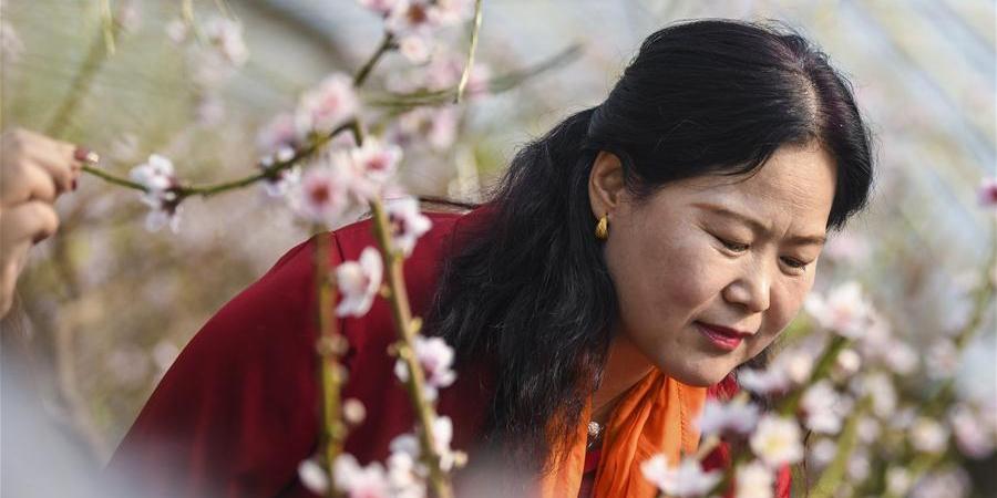 Flores de pêssego de estufa atraem centenas de turistas em Xinjiang, noroeste da China