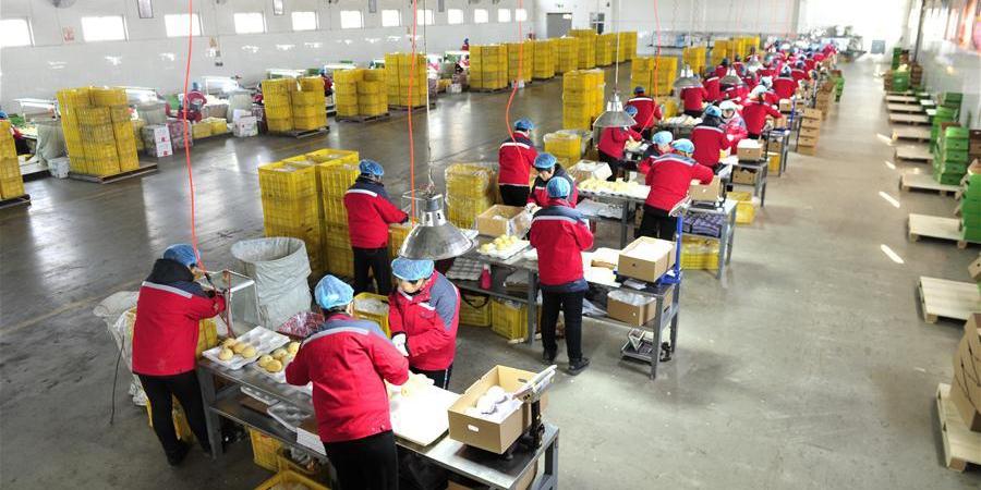 China exporta peras para o Brasil pela primeira vez